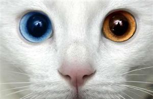 Hangi Kedi Türü Sana Uygun