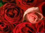 أي زهرة أنتي ؟