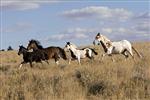Sei Un Vero Appassionato Di Cavalli?