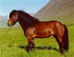 Hvilken Hest Er Du?