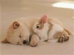 Ce Animal E Perfect Pentru Tine?