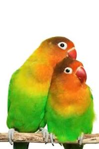 Sen Hangi Kuş Türüsün?