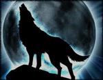 Quel Genre De Loup Es Tu ?